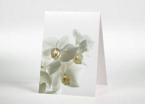 Weiße Orchidee - Sterbebildchen Motiv B-15