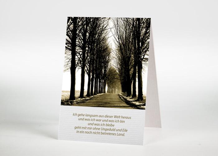 Sonnendurchfluteter Waldweg - Sterbebildchen Motiv F-12