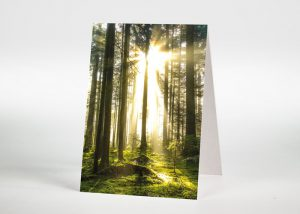 Sonnenstrahlen im Wald - Sterbebildchen Motiv F-40