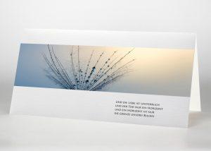 Detailaufnahme eines Pusteblumensamens - Trauerkarte Motiv B-13
