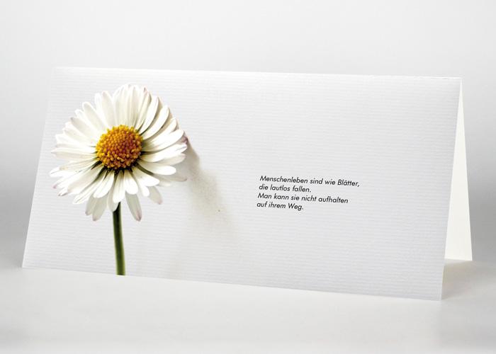 Gänseblümchen - Trauerkarte Motiv B-21