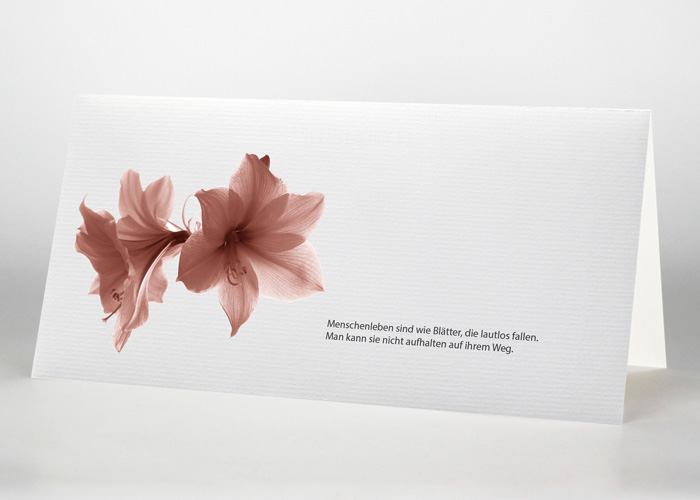 Amaryllis - Trauerkarte Motiv B-24