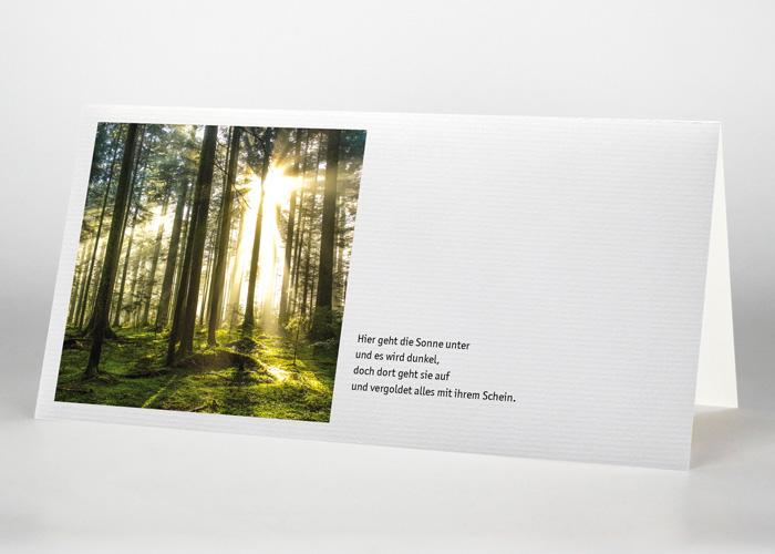 Sonnenstrahlen im Wald - Trauerkarte Motiv F-40